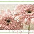 Gerber Daisy Happiness 3 by Andee Design
