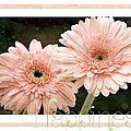 Gerber Daisy Happiness 5 by Andee Design
