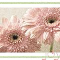Gerber Daisy Joy 3 by Andee Design