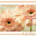 Gerber Daisy Peace 2 by Andee Design