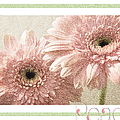 Gerber Daisy Peace 3 by Andee Design