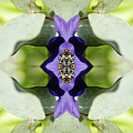 Gerbera Flower by Silvia Otte