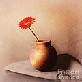 Gerbera In Stone Vase by Malcolm Bumstead