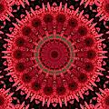 Gerbera Mandala by MM Anderson