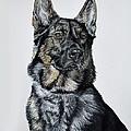 German Shepherd Bodhi by Ann Marie Chaffin