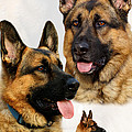 German Shepherd Collage by Sandy Keeton