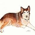 German Shepherd Dog by Nan Wright