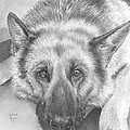 German Shepherd by Heather Gessell