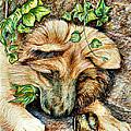 German Shepherd Pup by Joy Reese
