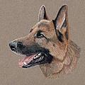 German Shepherd by Ron Bird