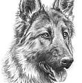 German Shepherd by Tobiasz Stefaniak