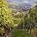 German Vineyard by Sharon Foster