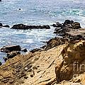 Gerstle Coastline by Suzanne Luft