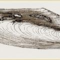 Gervillia Aviculoides by Litz Collection