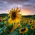 Get Sun by Steffen Gierok