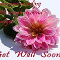 Get Well Soon - Louise Dahlia - Pink Flower by Barbara Griffin