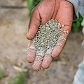 Ghanzi, Botswana- Fertilizer Pellets by Edwin Remsberg