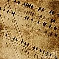 Ghost Birds On A Wire by Deborah Talbot - Kostisin