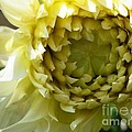Ghost Flower by Kimberlee Baxter