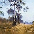 Ghost Gum At Kangaroo Flat by Pg Reproductions
