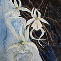 Ghost Orchid Blooming by Patricia Beebe
