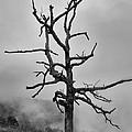 Ghost Tree by Harold Rau