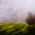 Ghost Tree In The Haunted Forest. Nuwara Eliya. Sri Lanka by Jenny Rainbow