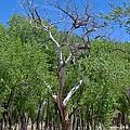 Ghost Tree by Jasmin's Treasures