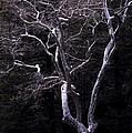 Ghost Tree by Kae Cheatham