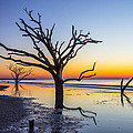 Ghost Trees Of Boneyard Beach 02 by Jim Dollar