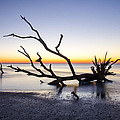 Ghost Trees Of Boneyard Beach 06 by Jim Dollar