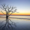 Ghost Trees Of Boneyard Beach 07 by Jim Dollar