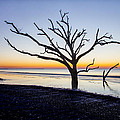 Ghost Trees Of Boneyard Beach 08 by Jim Dollar