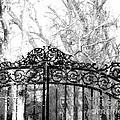 Ghosted Gateway by Lizi Beard-Ward