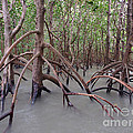 Ghostly Mangroves by Focus Far and Wide