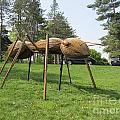 Giant Ant by Terry Hunt