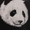 Giant Panda by Bob Williams