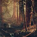 Giant Redwood Trees Of California by Albert Bierstadt