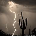 Giant Saguaro Cactus Lightning Strike Sepia  by James BO Insogna