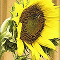 Giant Sunflower With Buds by Kay Novy