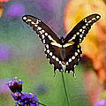 Giant Swallowtail Butterfly Photo-painting by Karen Adams