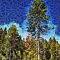 Giant Tree Abstract by Barbara Snyder