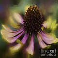 Giddy Girl  by Jean OKeeffe Macro Abundance Art