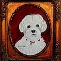 Gidget.my Maltese by Fram Cama