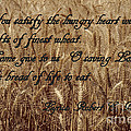 Gift Of Finest Wheat by Sharon Elliott