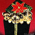 Gift Puppies by Judy Skaltsounis