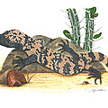 Gila Monster by Cindy Hitchcock