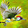Gila Woodpecker by Bob and Nadine Johnston