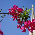 Gilbert Arizona Temple Spire by Amy Seifert