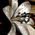 Gilded Lilies 3 by Linda Bianic